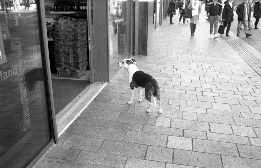 Dog waiting outside a shop for it's owner