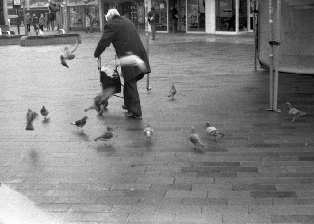 Old man been hassled by a group of pigeons