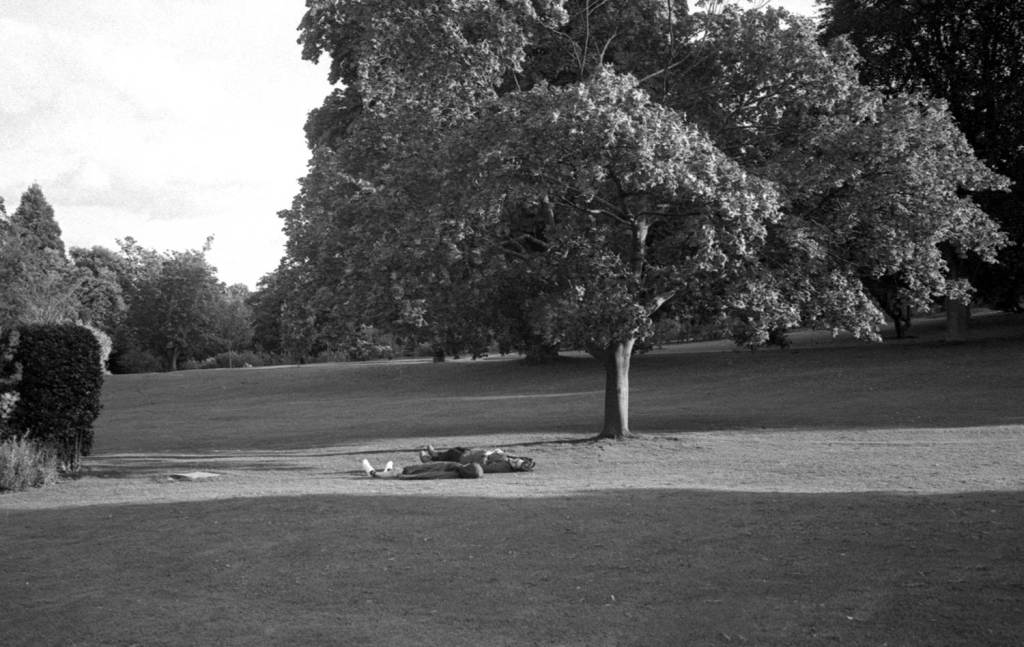 Young couple lay in the sun at Sheffield botanical gardens