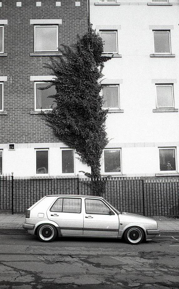 Volkswagen Golf being overshadowed by Ivy growing up a wall
