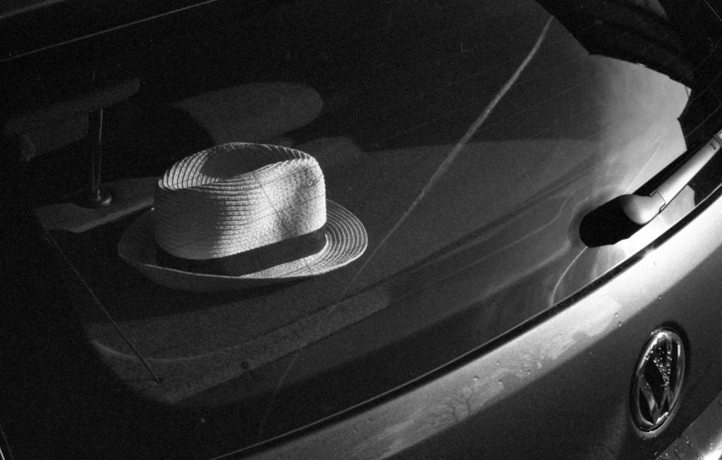 Fedora sits in back of car on a sunny day
